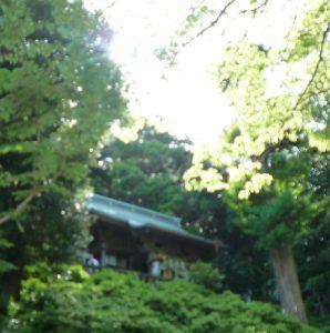 走水神社 森と社殿