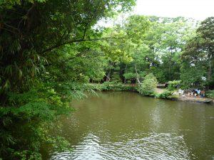 氷川神社 池