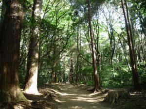 鹿島神宮 森の道
