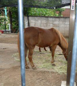立石熊野神社 馬