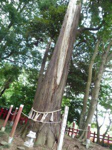 麻賀多神社(船形) 大杉