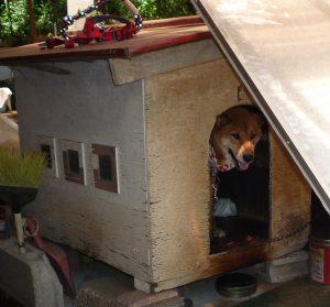 思金神社 犬